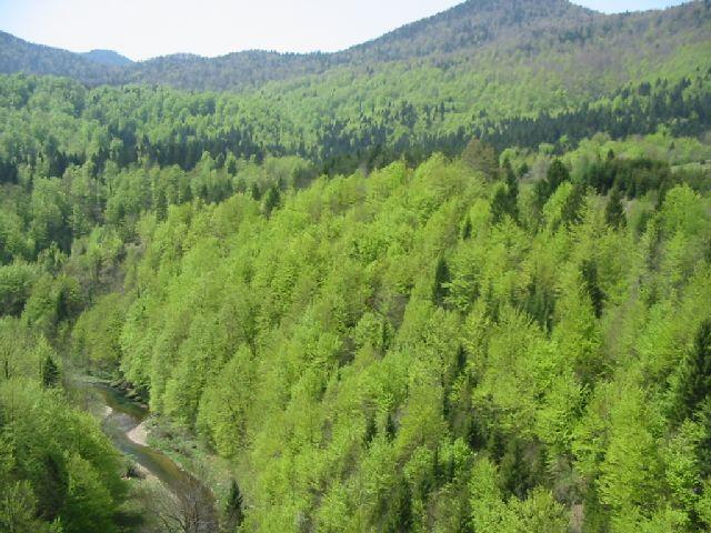 šuma Kamačnik271