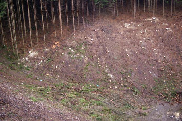 Sječe se šuma oko sjedišta budućeg Holdinga