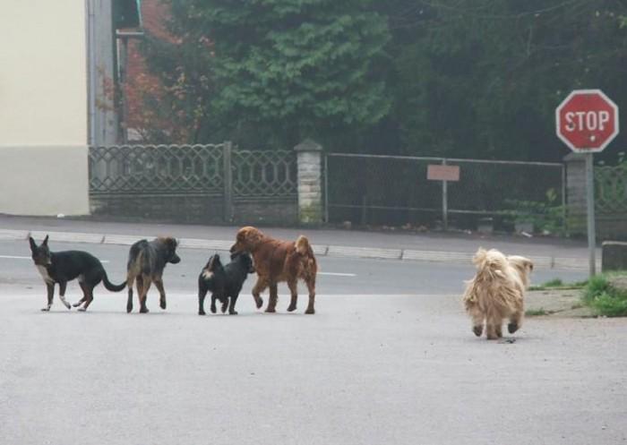 Obaziru li se psi na prometne znakove?