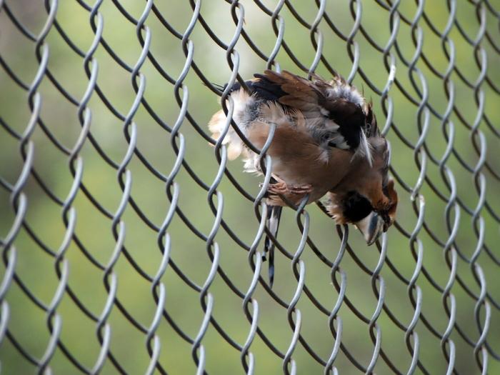 Ena Mlinac pohvaljena je za fotografiju Smrt u žici